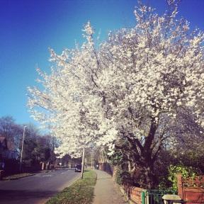 Beautiful blossom tree